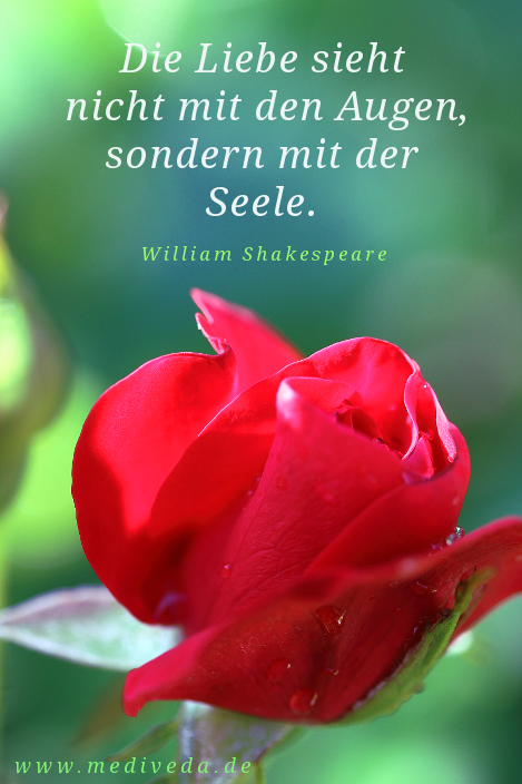 Rose for Blumen zitate